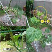 水耕栽培・・・不安 - ■■ Ainame60 たまたま日記 ■■