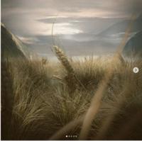 「エイリアン:コヴェナント」に出てくる大麦に怖ろしいものが……(映画ネタバレではないです) - Suzuki-Riの道楽
