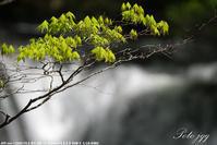 小滝にて その3 ・・・ - ぶらりカメラウォッチ・・