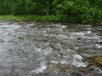 2017 渓流ドライフィッシング釣行 - moonlit river