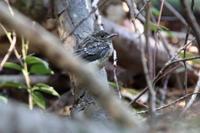 かわいい幼鳥いっぱい 夏鳥巣立ちラッシュ - 野鳥写真日記 自分用アーカイブズ