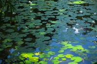 噴水のある池 - tokoのblog