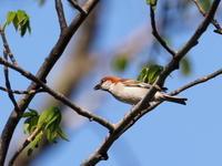 戸隠森林植物園でこんな野鳥も - コーヒー党の野鳥と自然 パート2