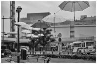 梅雨入り - BobのCamera