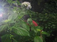もうすぐ梅雨ですね<(_ _)> - ケアホーム穂の香(ほのか)、ケアホームあや音(あやね)、デイサービス燈いろ(といろ)の日常