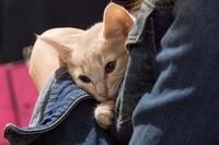 養子縁組を待つ子猫たち - Soul Eyes