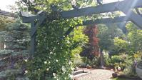 6月8日の庭 - 今から・花