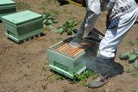 新しい事はじめます、後日お知らせ - 八風農園 雅 鈴鹿連峰の御在所岳の麓で自然食品を製造販売してる農園です!