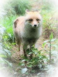 6月8日(木)入梅 - ほのぼの動物写真日記