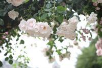 Rose Garden - 普  段  着