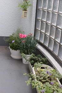 ベランダの花を立体的に見せたい - 空色のココロ~小さな幸せを探して~