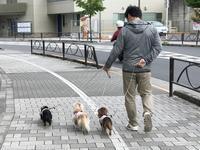 17年6月8日 今日もみんな一緒(^^♪ - 旅行犬 さくら 桃子 あんず 日記