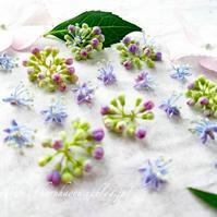 ガクアジサイの花 - tuboniwanisaku