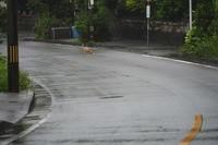 沖縄の旅4(4cut) 久米島編 -     ~風に乗って~    Present