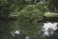 「水辺の緑2」 - hal@kyoto