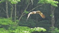 朝霧高原 - 山と鳥を愛するアナパパ