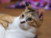 【千尋・エイト・ナナコ】とにかく猫ダンゴしたい - ねこ結び2
