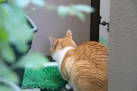 つまんない - ぎんネコ☆はうす