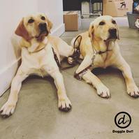 Hello Jam & Ayumu !! - Doggie Do!! / good dog and hello cat !!