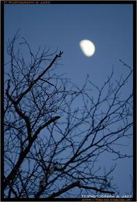 月夜 - TI Photograph & Jazz