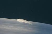 アイバーコーラルゴビー ハゼ科の1種 - Diving Photo