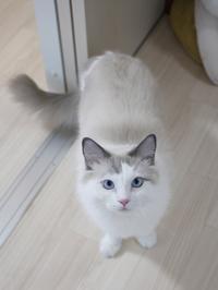 猫のお留守番 小石丸くん編。 - ゆきねこ猫家族