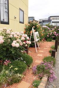 北側花壇のバラたち - my small garden~sugar plum~