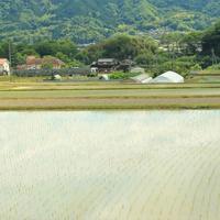 水田の風景 - ゆる鉄旅情