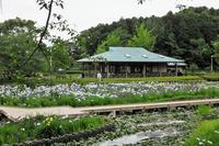 袖ケ浦公園で見たバリケン、花菖蒲など - ぶらり散歩 ~四季折々フォト日記~