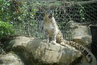 ミミ&コボ おめでとう - 動物園に嵌り中