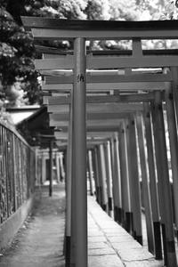 短焦点レンズで根津神社を撮る - デジカメ持ってING