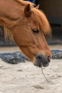 馬の爪楊枝 - 彩りの軌跡