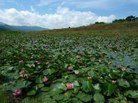 スイレン咲くトンボ池 - デジタルで見ていた風景
