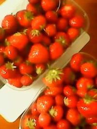 fraises a cueillir/いちご狩り - コルマール街暮らし