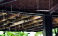 雨と藤 - ユルリ ユルリト。