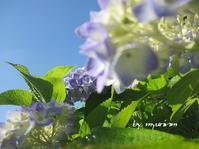六月の青い空 - 今日から明日へ・・・
