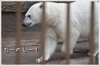 ほっきょくぐまのいちにち 2017/06/04 - メタのマクロ視点な奇跡なんて白熊の為