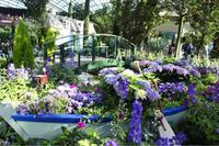 ガーデンズバイザベイが5周年を迎えました♪ - minako's  official blog 中野美奈子シンガポールブログ