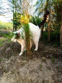 おの農園の3猫兄弟 - 百姓の一日