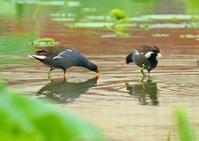 湿原のメンドリ - JUNJUNのブログへようこそ!
