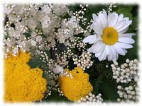 六月の満月と蛍 - マリカの野草画帖