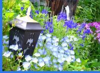 マイガーデンのブルー - 軽井沢プリフラdiary