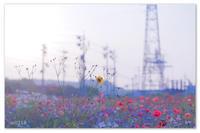 早起き。 - Yuruyuru Photograph
