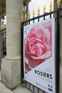 バラ roses - tony☆