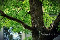 my favorite tree - IL EST TROP TARD     時は過ぎゆく ...