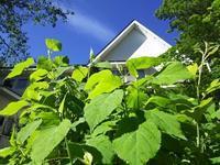 ルバーブジャム - 浅間高原・北軽井沢 ペンション・ローエングリンの高原日記