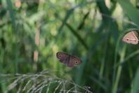 ヒカゲの一日 - 蝶超天国