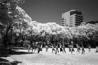 2017年6月13日 赤外線の中で踊る人々 - Silver Oblivion