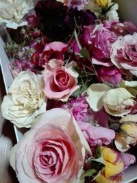 苺のパンツが可愛い押し花 - Rose&Farm