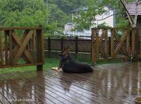雨降り、一時竜巻警報 - Photo Album
